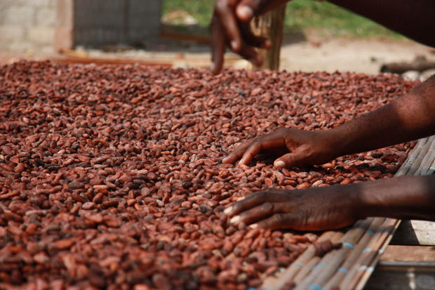 Marché du cacao: le label Fairtrade tire, à son tour, la sonnette d'alarme